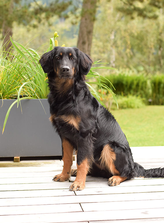 Dog friendly hotel at Katschberg - winter holidays in Austira